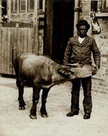 YOUNG BUFFALOE FROM UGANDA AND BLACK BOY   +- 21*16CMFonds Victor FORBIN (1864-1947) - Non Classificati