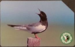 Telefonkarte Polen - Biebrza National Park - Vogel - Weißflügelseeschwalbe - Poland