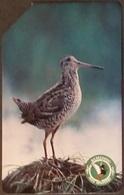 Telefonkarte Polen - Biebrza National Park - Vogel - Doppelschnepfe - Poland