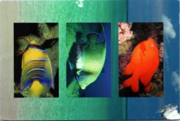 Pennsylvania Allentown Jeffrey M Rosen D M D Dental Check-Up Reminder Saltwater Fish 2003 - United States