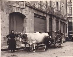 FOIX ARIEGE Octobre 1930 Attelage De Boeufs Photo Amateur Format Environ 7,5 Cm X 5,0 Cm FRANCE - Berufe
