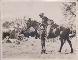 AUSTRALIA THE DROVER STOCK RIDER CATTLE COWBOY SOUTHERN RAILWAYS   +- 21*16CMFonds Victor FORBIN (1864-1947) - Non Classificati