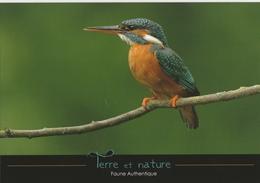 MARTIN-PÊCHEUR - Oiseaux