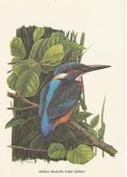 MARTIN-PÊCHEUR - Pájaros