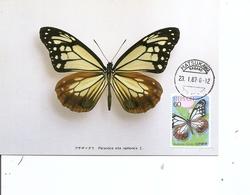 Papillons ( CM Du Japon De 1987 à Voir) - Papillons