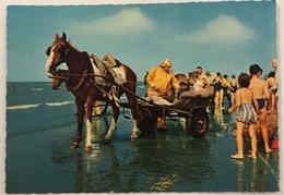 (90) Garnaalvisser Met Paard En Kar Aan De Belgische Kust - Veel Kijklustigen - Pêche