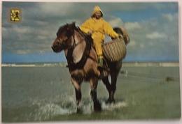 (91) Groeten Van De Belgische Kust -  Garnaalvisser Op Een Brabants Trekpaard. - Souvenir De...