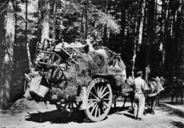 CORSE - Retour Des Bergers à La Montagne - Attelage De Chevaux - Chèvre - Non Classés