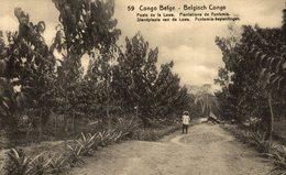 CONGO BELGE - Poste De La Lowa - Plantations De Funtumia - Congo Belga - Otros