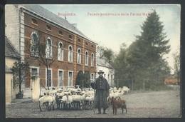 +++ CPA - BRUGELETTE - Façade Postérieure De La Ferme Hayois - Troupeau Moutons Et Berger - Métier  // - Brugelette