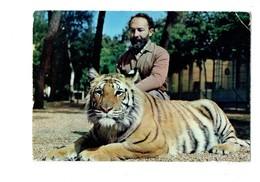 Cpm 72 - LA FLECHE - PARC ZOOLOGIQUE ZOO -  J. Bouillault Naturaliste Directeur - Tigre - Tigres
