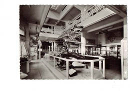 Cpsm - 64 - Biarritz - Musée De La Mer - Galerie D'exposition Squelette Baleine Orque Ou épaulard Raie GRANDE PECHE - Biarritz