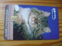 Phonecard Hungary - Cat - Ungheria