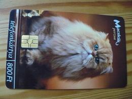 Phonecard Hungary - Cat - Hungary