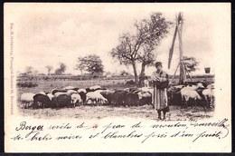 1901 ROMANIAN CPA ** SHEPHERD WITH SHEEP - BERGER AVEC MOUTON ** édit. Em. M. Grünberg - Bucuresci - Roumanie
