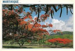 Martinique Flamboyants Sur La Route Du Vauclin (2 Scans) - Non Classés