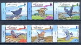 G73- ALDERNEY 2007 UCCELLI ENDEMICI. BIRDS. - Alderney