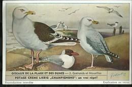 CHROMO LIEBIG . OISEAUX DE LA PLAGE ET DES DUNES . GOELANDS ET MOUETTES . - Liebig