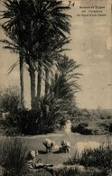 Algérie - Palmiers Au Bord D'un Chott - Algérie