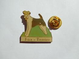 Beau Pin's , Chien Fox Terrier - Animals