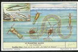 CHROMO LIEBIG . LE PLANCTON MARIN . LES COPEPODES . - Liebig