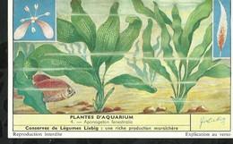 CHROMO LIEBIG . PLANTES D'AQUARIUM . APONOGETON FENESTRALIS . - Liebig