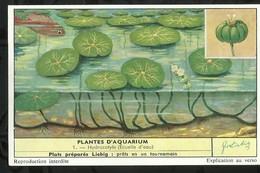 CHROMO LIEBIG . PLANTES D'AQUARIUM . HYDROCOTYLE . - Liebig