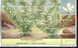 CHROMO LIEBIG . PLANTES D'AQUARIUM . ELODEA . - Liebig