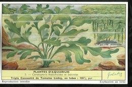 CHROMO LIEBIG . PLANTES D'AQUARIUM . CERATOPTERIS THALICTROIDES ET SALVINIAS . - Liebig