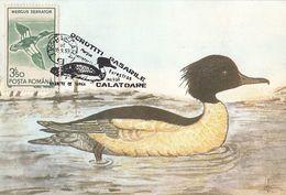 BIRDS, DUCKS, RED BREASTED MERGANSER, MAXIMUM CARD, 1993, ROMANIA - Canards
