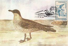 BIRDS, POMARINE JAEGER, SKUA, MAXIMUM CARD, 1993, ROMANIA - Albatros