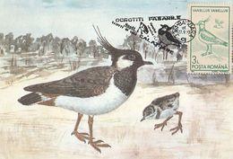 BIRDS, NORTHERN LAPWING, MAXIMUM CARD, 1993, ROMANIA - Cigognes & échassiers