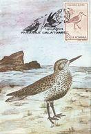 BIRDS, DUNLIN, MAXIMUM CARD, 1993, ROMANIA - Cigognes & échassiers