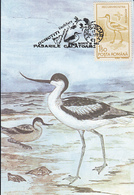 BIRDS, PIED AVOCET, MAXIMUM CARD, 1993, ROMANIA - Cigognes & échassiers