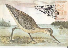 BIRDS, BLACK TAILED GODWIT, MAXIMUM CARD, 1993, ROMANIA - Cigognes & échassiers