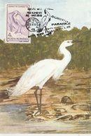 BIRDS, LITTLE EGRET, MAXIMUM CARD, 1993, ROMANIA - Pélicans