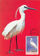 BIRDS, LITTLE EGRET, MAXIMUM CARD, 1981, ROMANIA - Pélicans