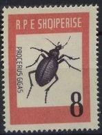 Albania 1963. Insectos. Procerus. Mi 737. MNH. **. - Albania