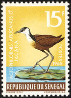 Senegal. 1968 : Jacana à Poitrine Dorée. African Jacana - Cigognes & échassiers