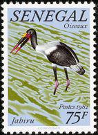 Senegal.  : Jabiru D'Afrique; Saddle-billed Stork. - Cigognes & échassiers