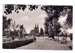 5000  KÖLN - DEUTZ, Blick Aus Dem Rheinpark Auf Den Kölner Dom, 1955 - Koeln