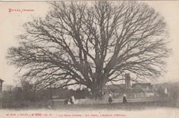 ETIVAL : (88) Le Gros Chêne Au Fond De L'Abbaye D'Etival - Etival Clairefontaine