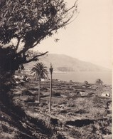 CANARIES SANTA CRUZ De LA PALMA 1956  Photo Amateur Format Environ 7,5 Cm X 5,5 Cm Espagne - Lugares