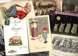 Lot 1865 De 10 CPA Cochon Pig Déstockage Pour Revendeurs Ou Collectionneurs - Ansichtskarten