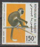Djibouti. Singe - Monkeys