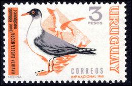 Uruguay 1968 3p Brown-hooded Gull Unmounted Mint. - Uruguay