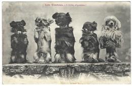 Les Toutous - Chiens - Chien Dressage - Chiens