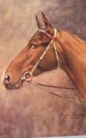 AR43 Animals - Artist Signed George Rankin - Horse's Head Facing Left - Caballos