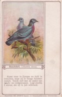 260555Boschduif, Columba Oenas. (RECLAME: DE JONG'S DAALDERS CACAO)(diverse Gebreken Zie Achterkant) - Vogels