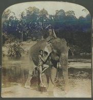 PHOTOS STEREO - CEYLAN - CEYLON - Mounting An Elephant ... - Photos Stéréoscopiques